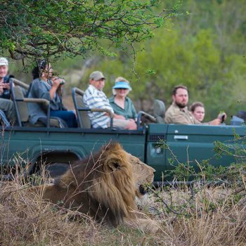 Nthambo Tree Camp Game Drive Lion