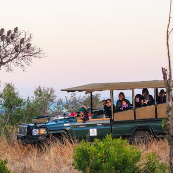 Shishangeni Private Lodge Game Drive