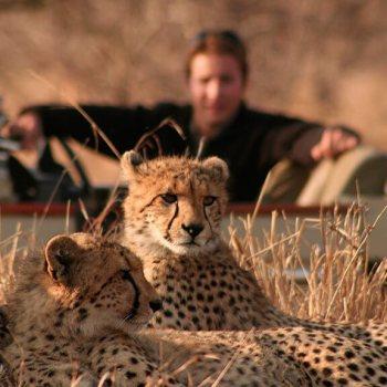 Tintswalo Safari Lodge Cheetahs