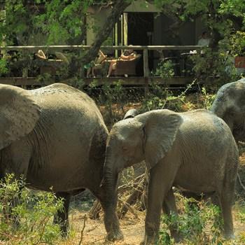 Tintswalo Safari Lodge Elephants