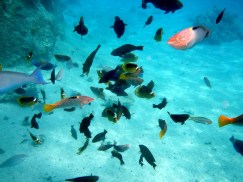 egypt, red sea, snorkeling