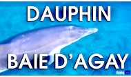 On a nagé avec le Dauphin dans la Baie d'Agay à Saint-Raphaël
