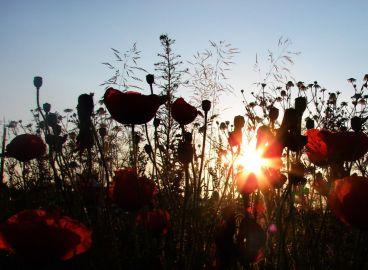 Rzeczniowskie pola (fot. K. Lachowicz)