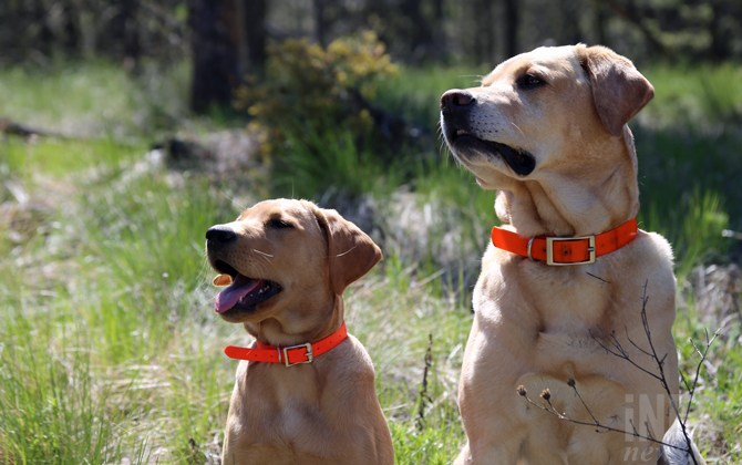 Search dog training camp taking place in Kamloops