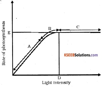1st PUC Biology Question Bank Chapter 13 Photosynthesis in Higher Plants 1
