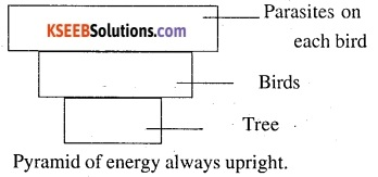 2nd PUC Biology Question Bank Chapter 14 Ecosystem 9