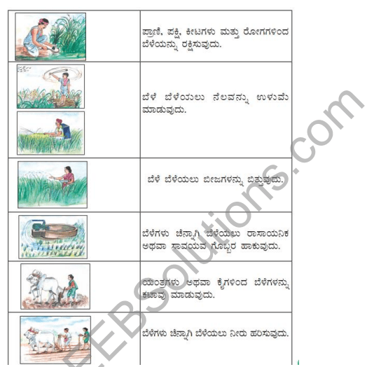 KSEEB Solutions for Class 5 EVS Chapter 8 Agriculture in Kannada 2