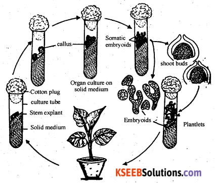 2nd PUC Biology Previous Year Question Paper June 2017 Q32
