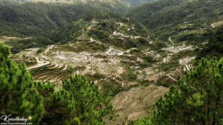 Maligcong rice terraces. At the center is Sitio Farung-ao where the Elementary school is located.