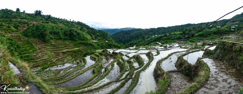 Panoramic and close-up view of Maligcong Rice terraces