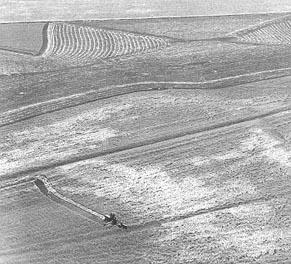 https://i1.wp.com/www.kshs.org/exhibits/wheat/graphics/wheat3.jpg