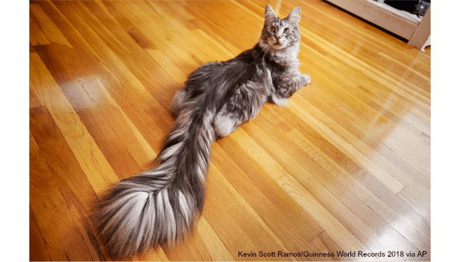 cygnus-long-tail-world-record-ap_494230