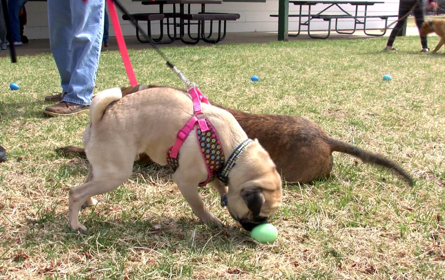 puppy easter egg hunt_1522023743180.jpg.jpg