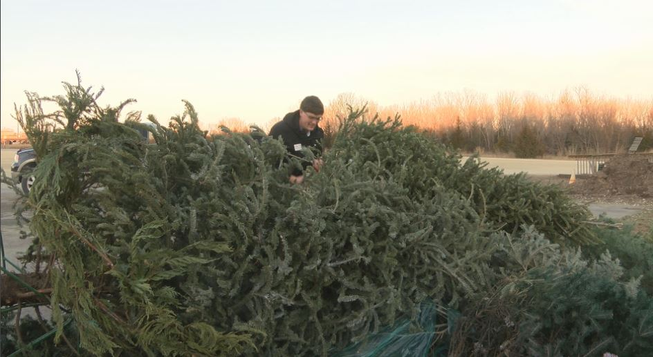 tree-recycling_1546486557810.JPG