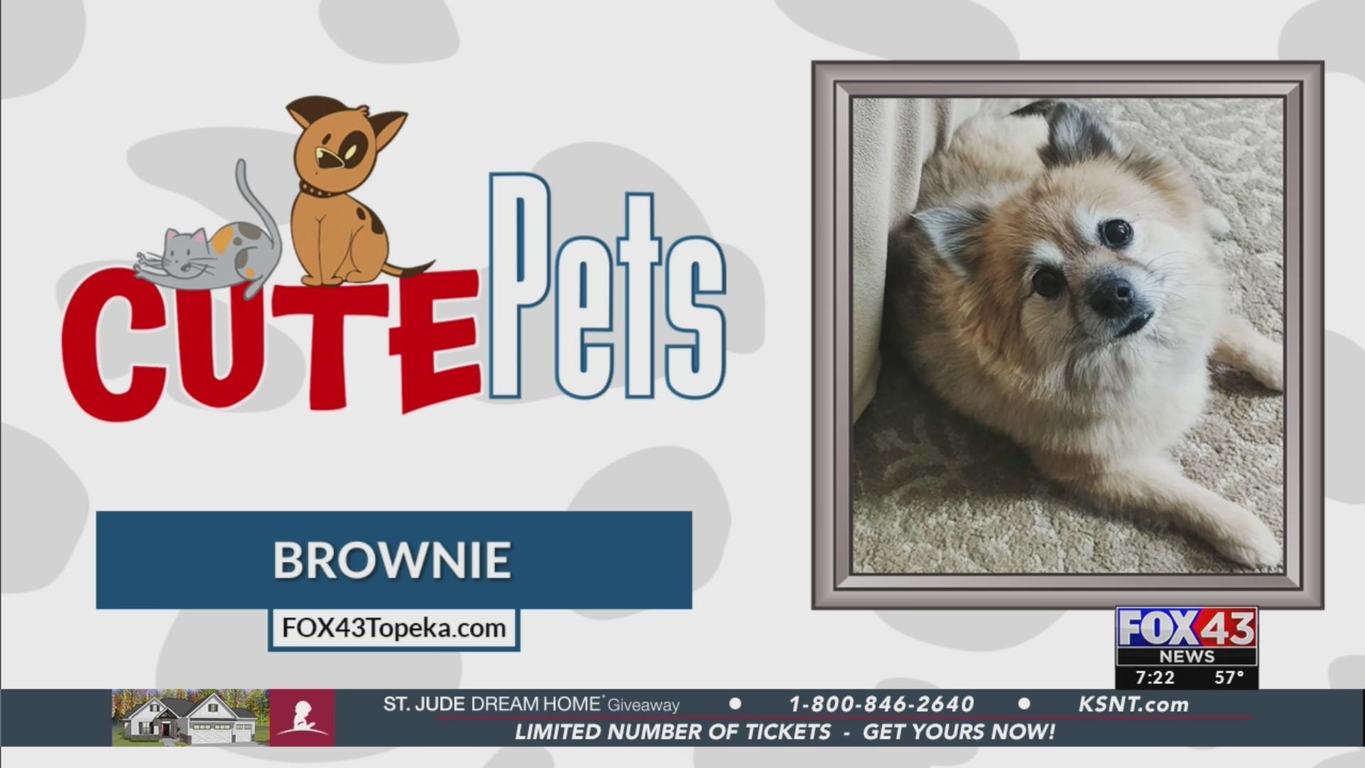 Cute Pets: Brownie (05/30/19)