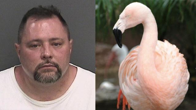 Florida flamingo_1561505451474.jpg.jpg