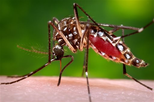 Suspected cases of potentially deadly mosquito-borne virus reported in Midwest