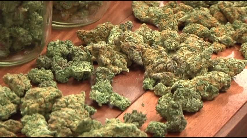 medical marijuana_41538716-159532
