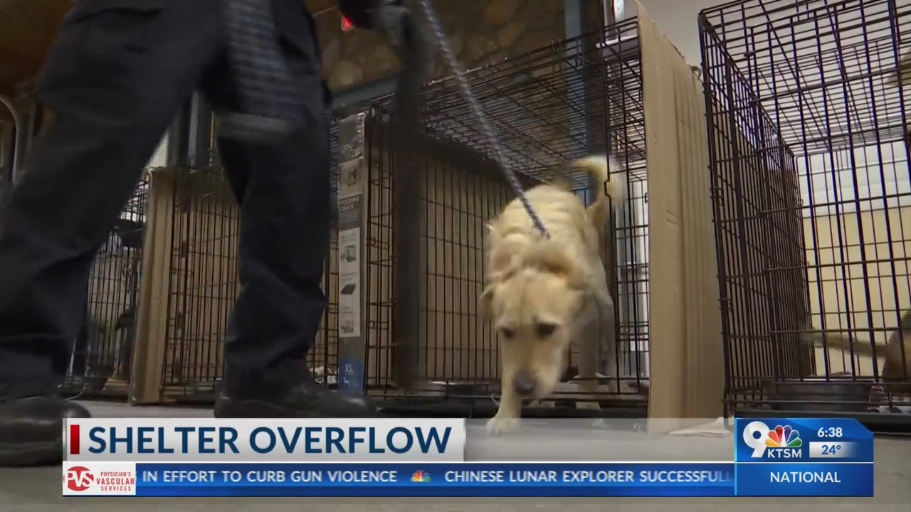 El Paso Animal Services had to move dogs to another location
