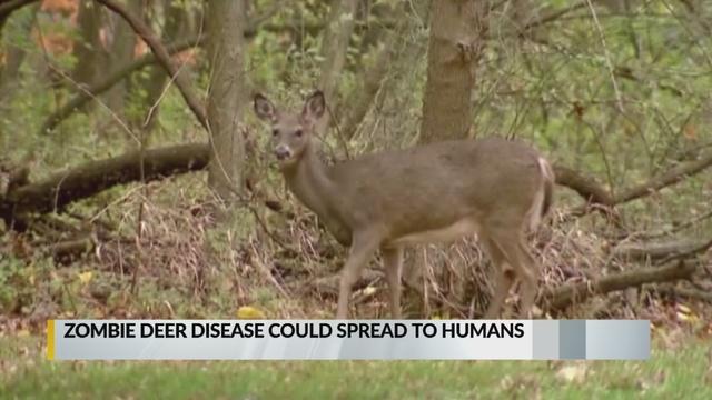 'Zombie deer disease' infects New Mexico deer, elk_1550188797011.jpg_73008441_ver1.0_640_360_1550441072215.jpg.jpg