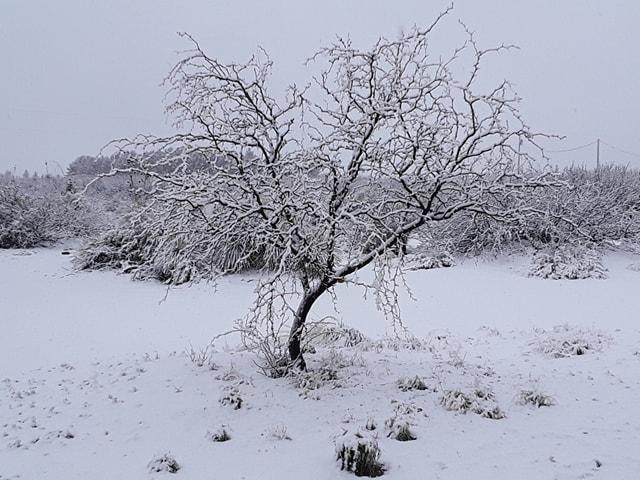 snow 2_1552776193514.jpg.jpg