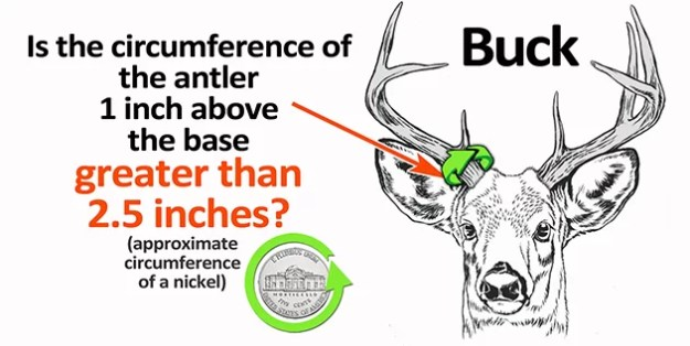 Deer Measure