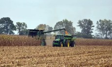 Crop - Corn Harvest