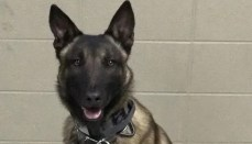 Zaki K-9 Deputy Livingston County Sheriff headline