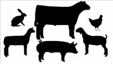 Livestock Show Winners
