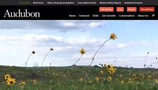 Audubon Society Website