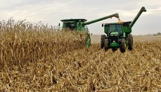 Farmer Combining Corn in Field