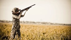 Young Dove Hunter