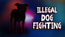Dog fight or Dogfighting news graphic