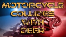 Motorcycle collides with deer