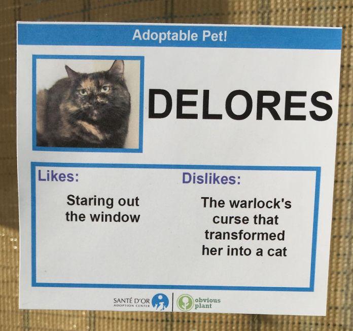 pusat adopsi2 - Cara Unik Relawan Los Angeles Bantu Pusat Adopsi Kucing Jalanan