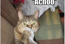 Sering bersin adalah salah satu tanda kucing kamu terkena cat flu.