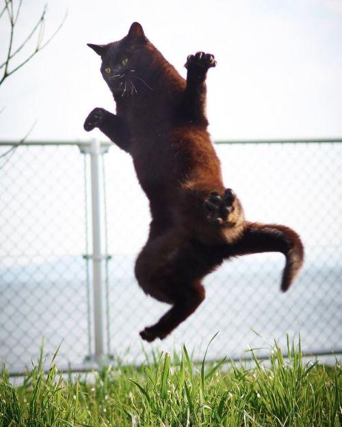 kucing belajar bela diri8 - 13 Aksi Kucing Belajar Bela Diri. Berani jadi Lawan Latih Tanding Mereka ?