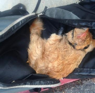 kucing malang - Beranda