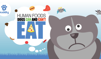 Human Foods Dogs Can and Cannot Eat