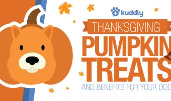 Thanksgiving Pumpkin Dog Treats