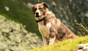 What To Do If You See An Animal That Is Injured, Being Abused, Neglected Or In Need