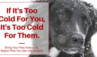 What To Do If You See An Animal Left Out In The Cold