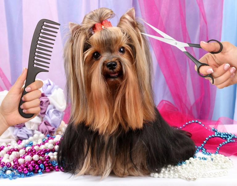 Simple Tips For Cutting Your Dog Hair