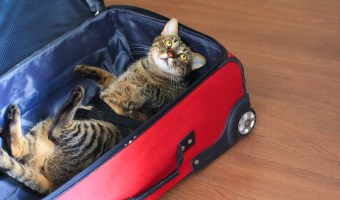 Traveling with Pets and How to Prepare