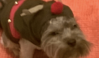 Should Our Pets Wear Clothes? When is it Too Much?