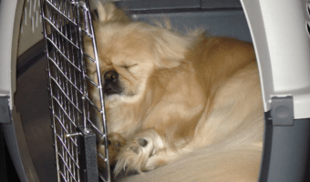 Increase In Efforts To Help Shelter Animals
