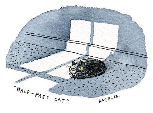 halfpastcat