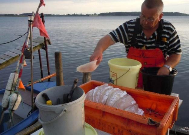 Noch auf dem Fischerboot ausgenommen - frischer bekommen Sie Neptuns kulinarische Kostbarkeiten nirgends.