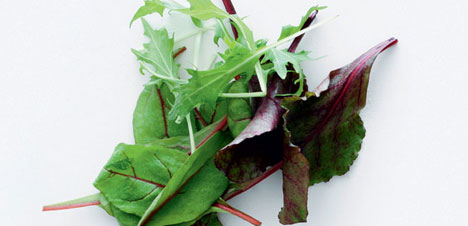 salater-main