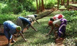 Ecosia, zelena internet tražilica